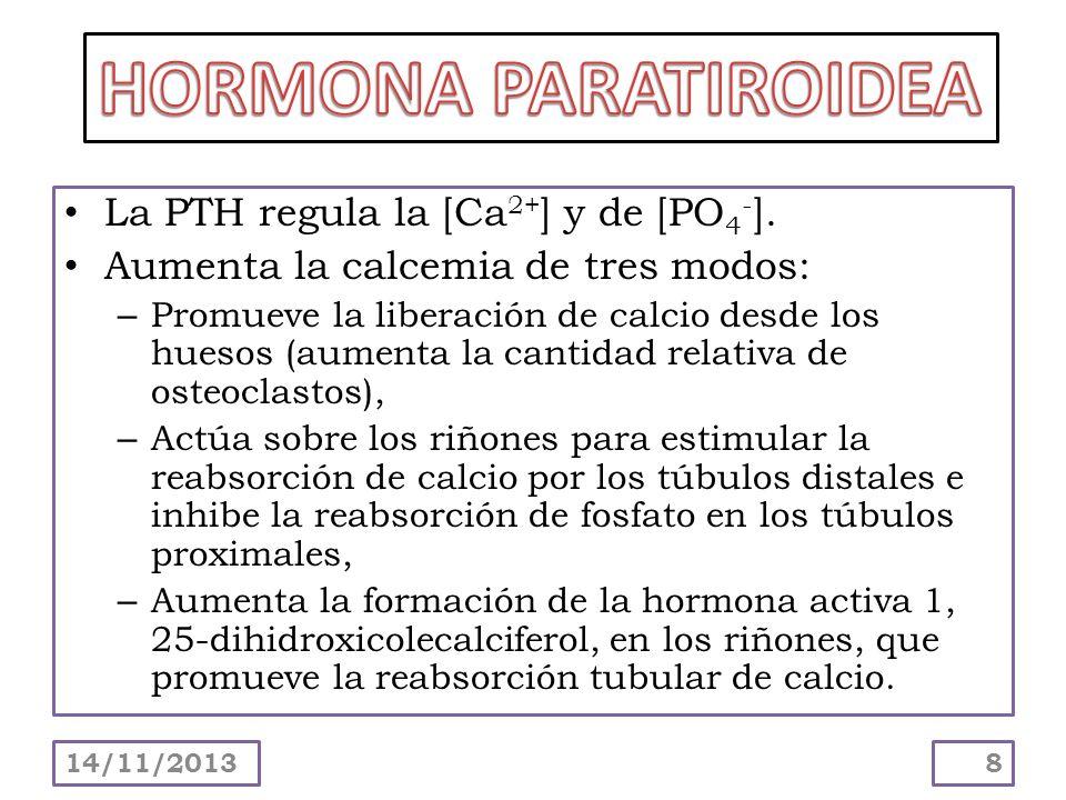 La PTH regula la [Ca 2+ ] y de [PO 4 - ]. Aumenta la calcemia de tres modos: – Promueve la liberación de calcio desde los huesos (aumenta la cantidad