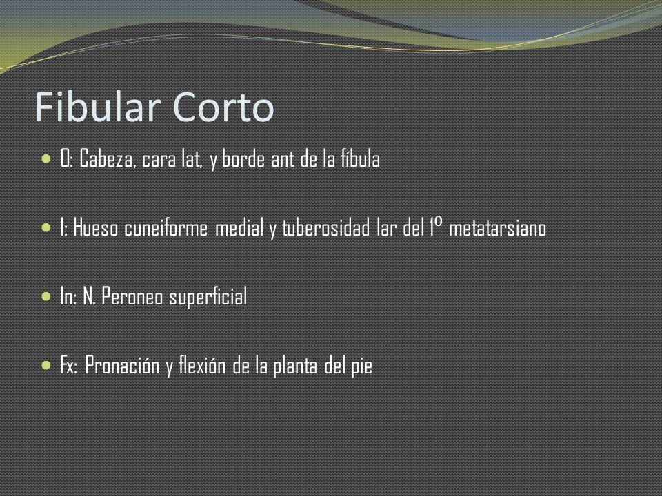 Fibular Corto O: Cabeza, cara lat, y borde ant de la fíbula I: Hueso cuneiforme medial y tuberosidad lar del 1 metatarsiano In: N. Peroneo superficial