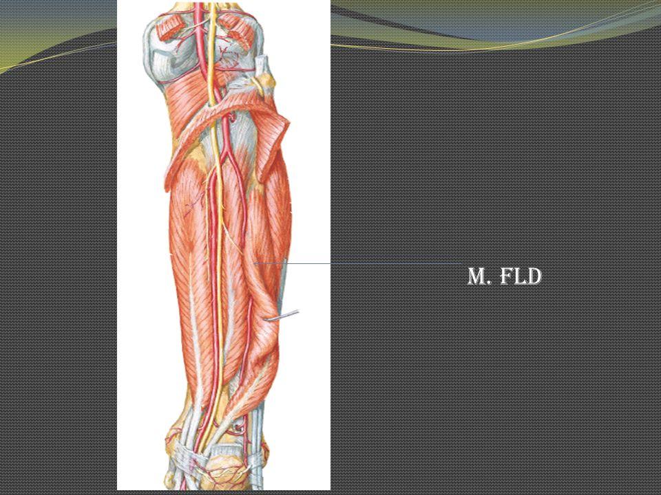 M. FLD
