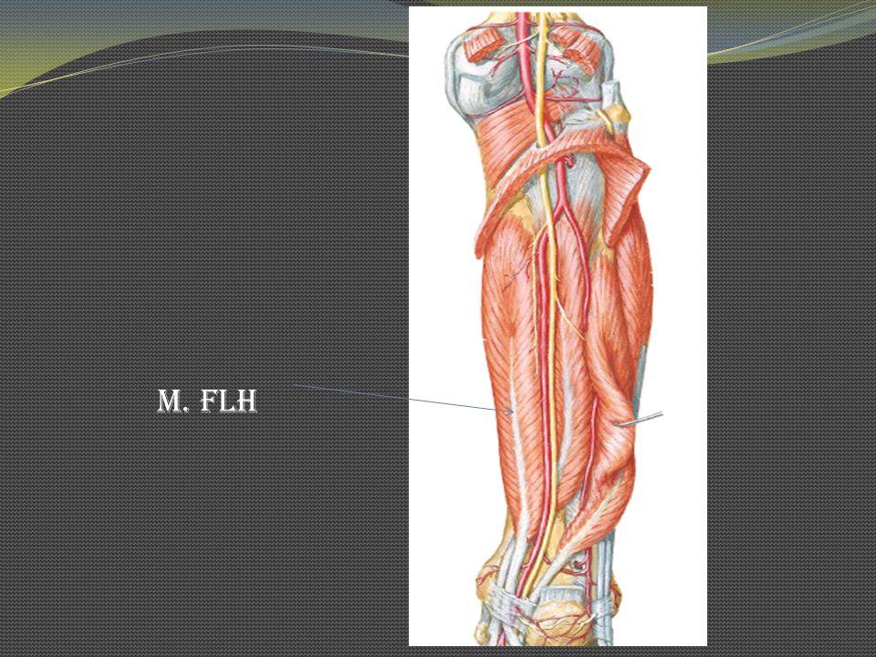 M. FLH