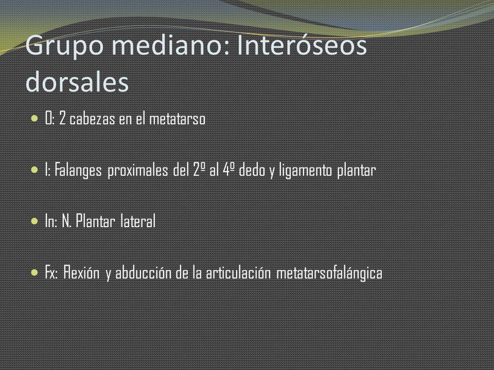 Grupo mediano: Interóseos dorsales O: 2 cabezas en el metatarso I: Falanges proximales del 2º al 4º dedo y ligamento plantar In: N. Plantar lateral Fx