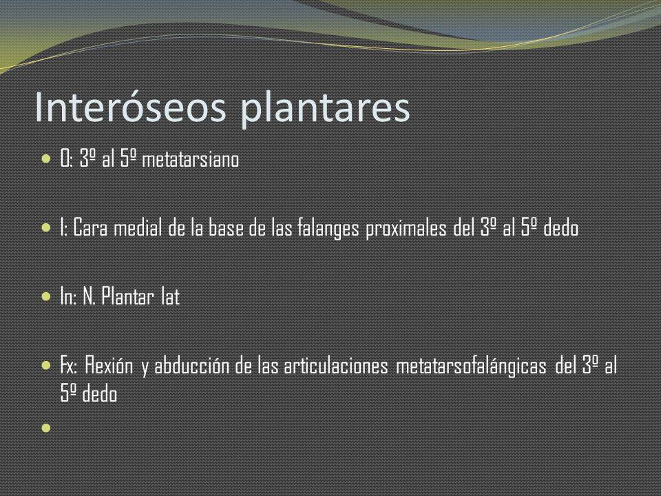 Interóseos plantares O: 3º al 5º metatarsiano I: Cara medial de la base de las falanges proximales del 3º al 5º dedo In: N. Plantar lat Fx: Flexión y