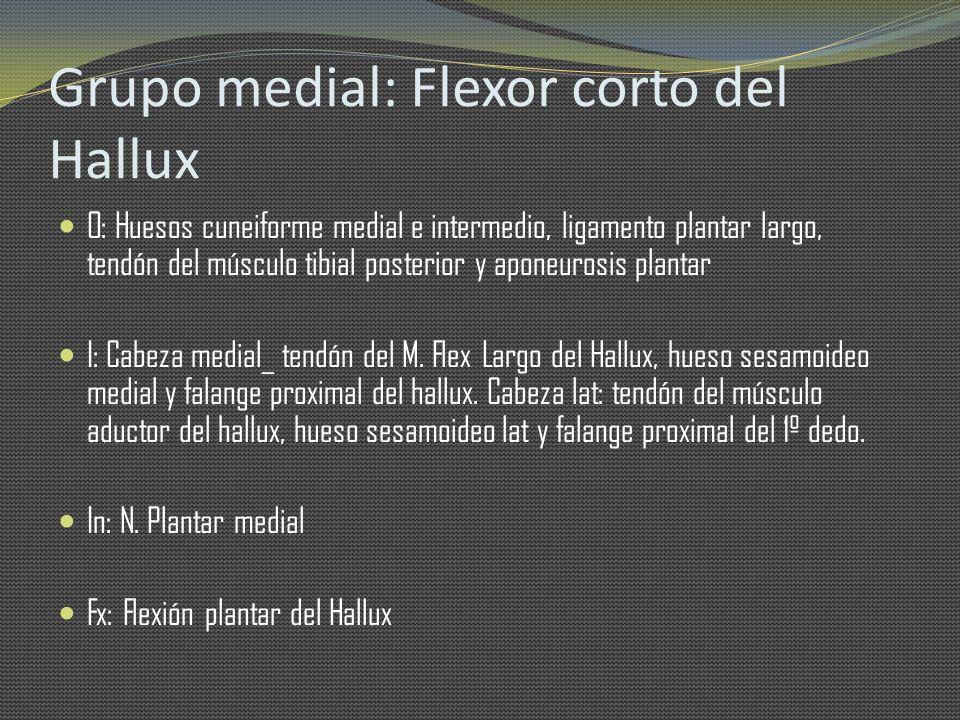 Grupo medial: Flexor corto del Hallux O: Huesos cuneiforme medial e intermedio, ligamento plantar largo, tendón del músculo tibial posterior y aponeur
