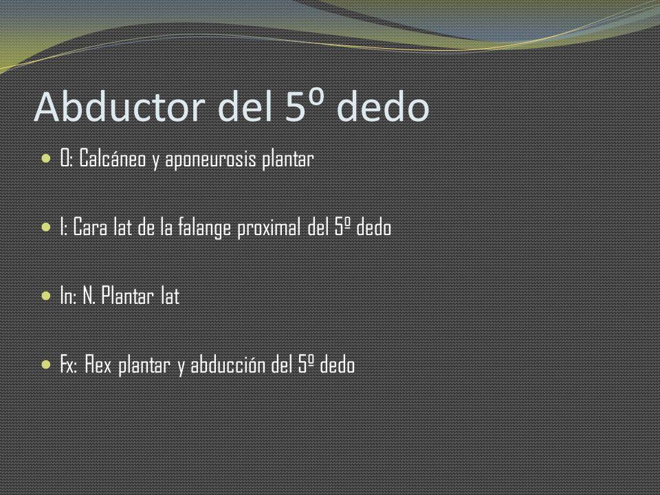 Abductor del 5 dedo O: Calcáneo y aponeurosis plantar I: Cara lat de la falange proximal del 5º dedo In: N. Plantar lat Fx: Flex plantar y abducción d