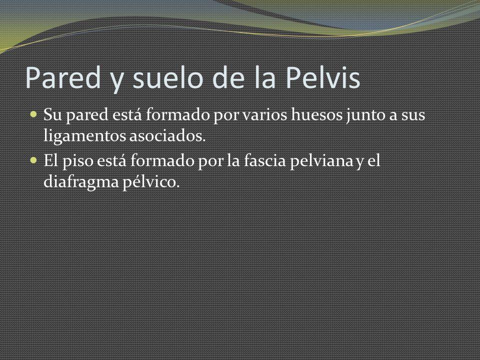 Pared y suelo de la Pelvis Su pared está formado por varios huesos junto a sus ligamentos asociados. El piso está formado por la fascia pelviana y el