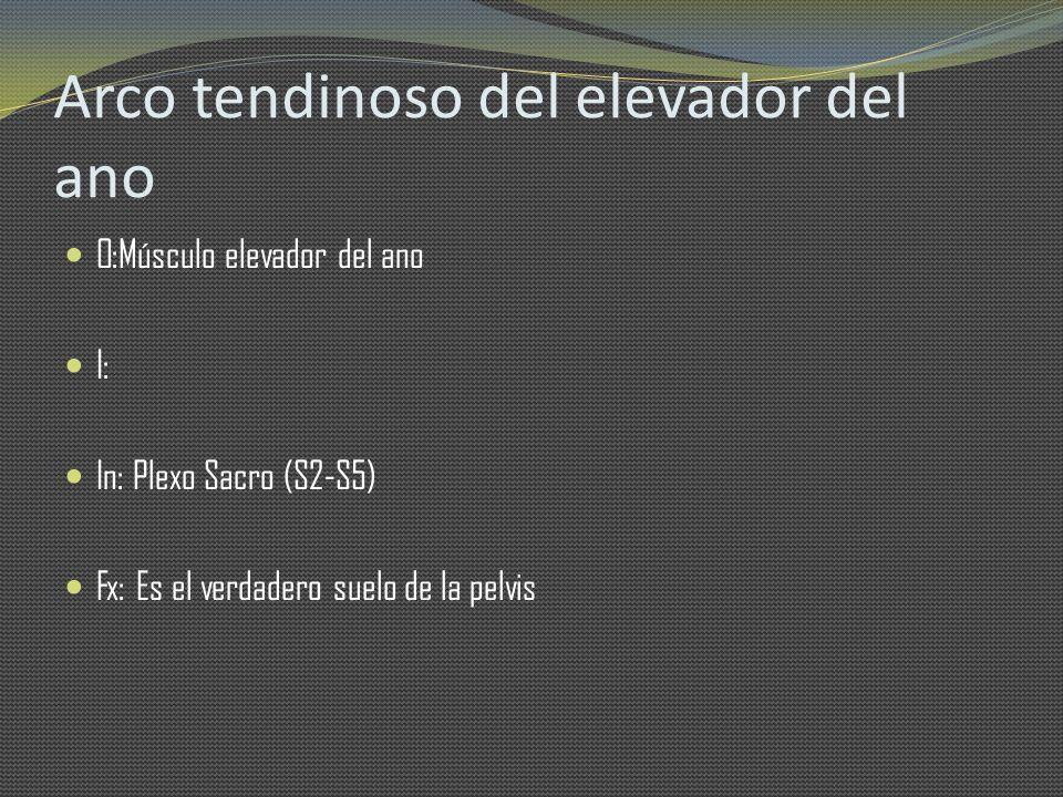 Arco tendinoso del elevador del ano O:Músculo elevador del ano I: In: Plexo Sacro (S2-S5) Fx: Es el verdadero suelo de la pelvis