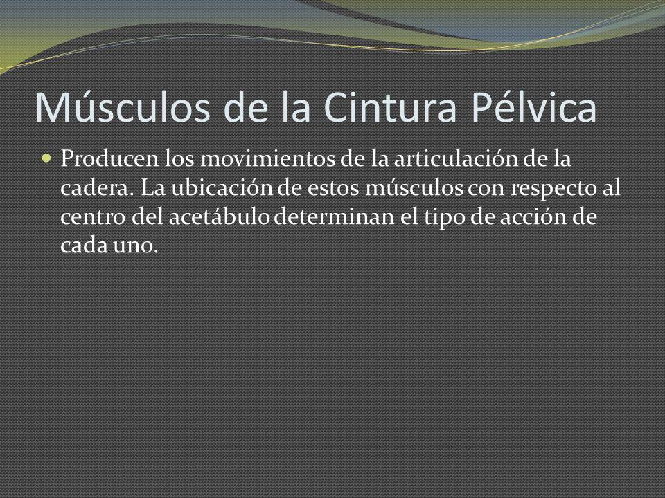 Músculos de la Cintura Pélvica Producen los movimientos de la articulación de la cadera. La ubicación de estos músculos con respecto al centro del ace
