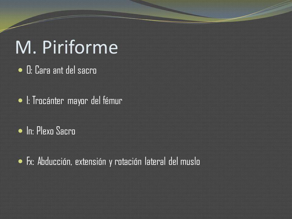 M. Piriforme O: Cara ant del sacro I: Trocánter mayor del fémur In: Plexo Sacro Fx: Abducción, extensión y rotación lateral del muslo