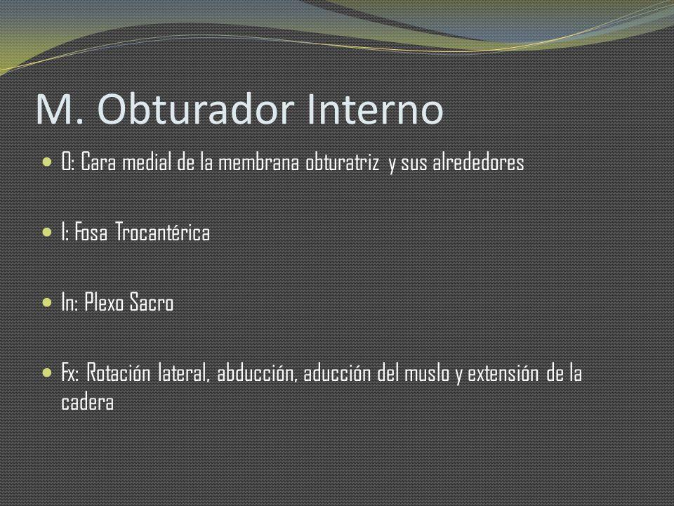 M. Obturador Interno O: Cara medial de la membrana obturatriz y sus alrededores I: Fosa Trocantérica In: Plexo Sacro Fx: Rotación lateral, abducción,