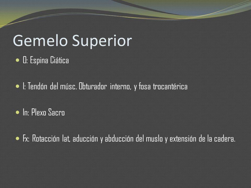 Gemelo Superior O: Espina Ciática I: Tendón del músc. Obturador interno, y fosa trocantérica In: Plexo Sacro Fx: Rotacción lat, aducción y abducción d