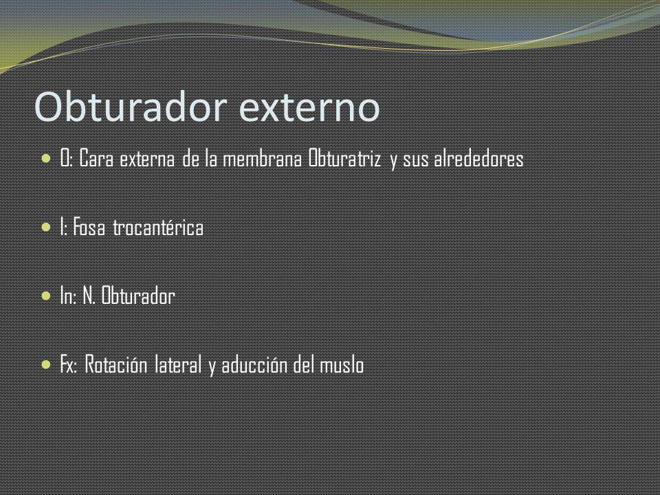 Obturador externo O: Cara externa de la membrana Obturatriz y sus alrededores I: Fosa trocantérica In: N. Obturador Fx: Rotación lateral y aducción de