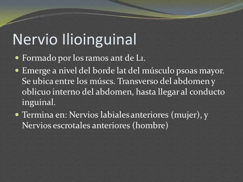 Nervio Ilioinguinal Formado por los ramos ant de L1. Emerge a nivel del borde lat del músculo psoas mayor. Se ubica entre los múscs. Transverso del ab