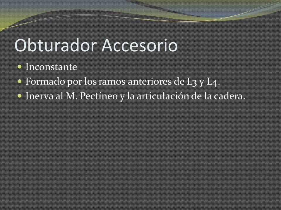 Obturador Accesorio Inconstante Formado por los ramos anteriores de L3 y L4. Inerva al M. Pectíneo y la articulación de la cadera.