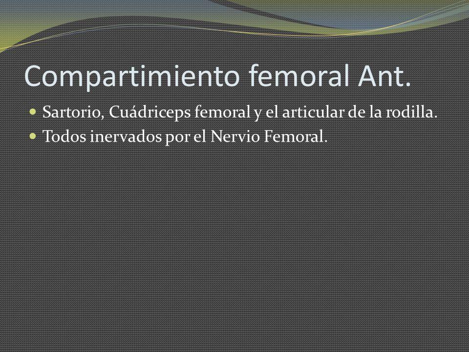 Compartimiento femoral Ant. Sartorio, Cuádriceps femoral y el articular de la rodilla. Todos inervados por el Nervio Femoral.