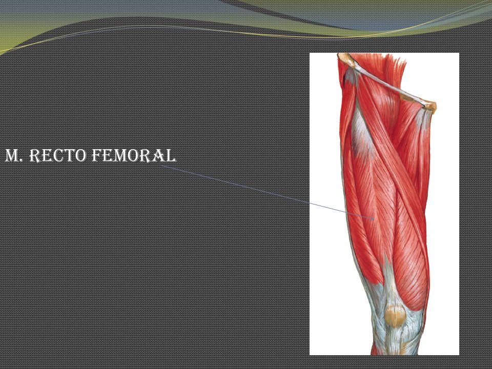 M. Recto Femoral