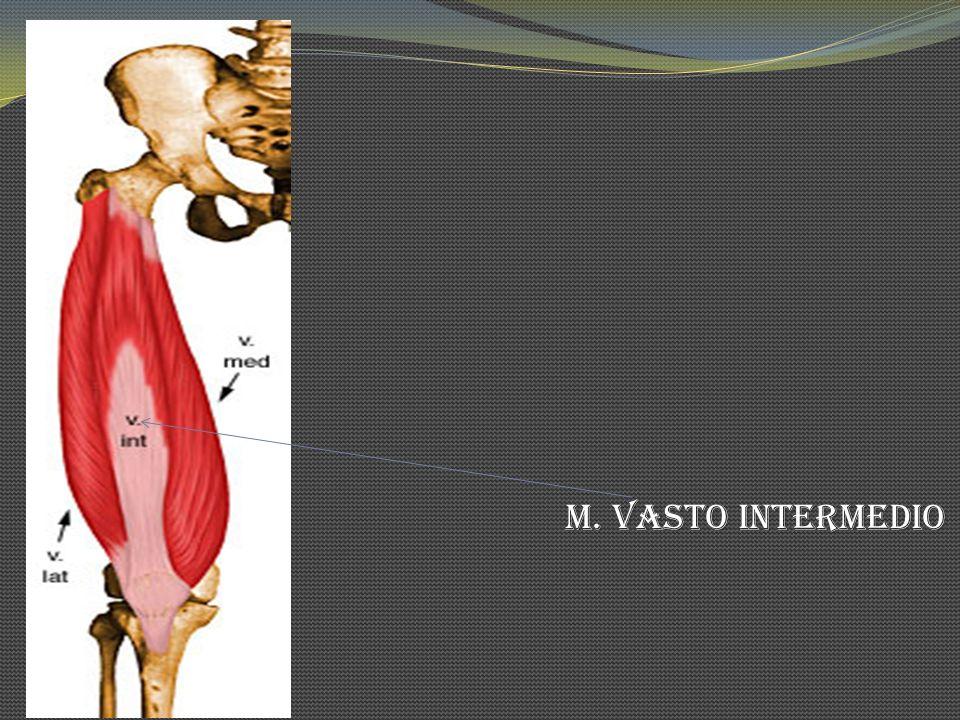 M. Vasto Intermedio