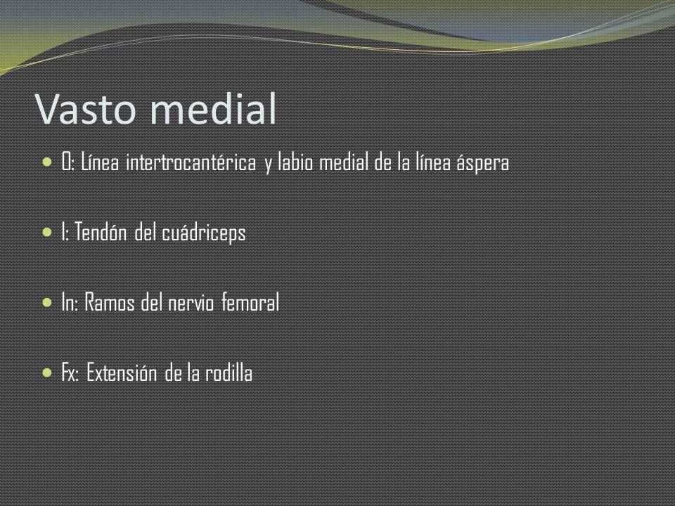 Vasto medial O: Línea intertrocantérica y labio medial de la línea áspera I: Tendón del cuádriceps In: Ramos del nervio femoral Fx: Extensión de la ro