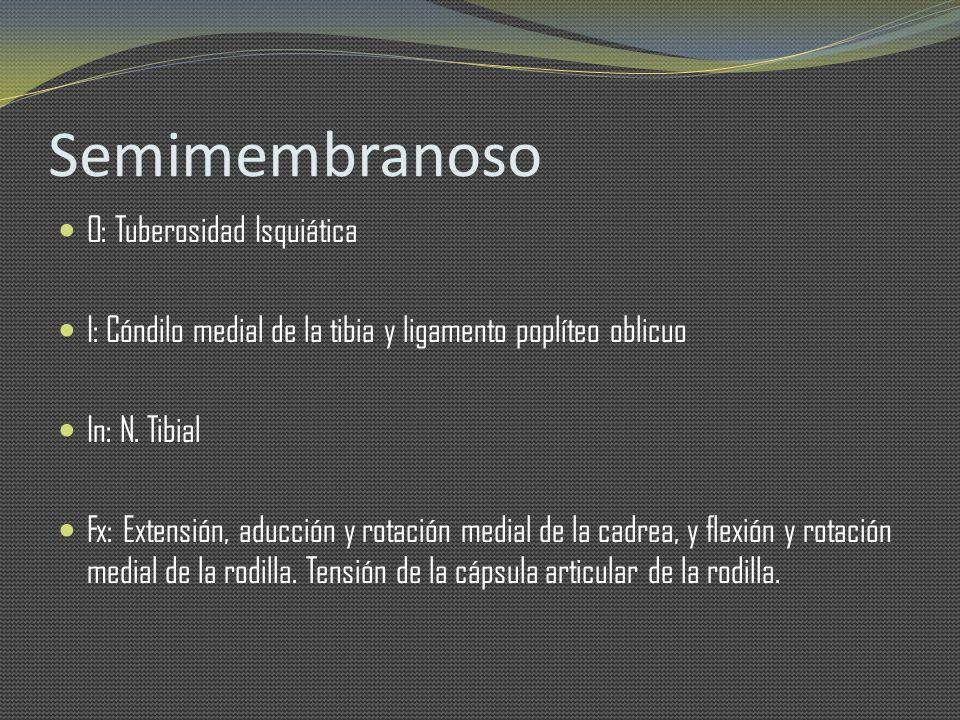 Semimembranoso O: Tuberosidad Isquiática I: Cóndilo medial de la tibia y ligamento poplíteo oblicuo In: N. Tibial Fx: Extensión, aducción y rotación m