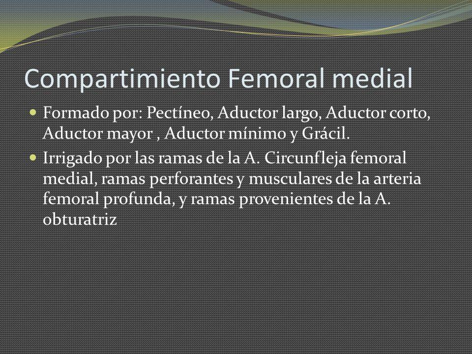 Compartimiento Femoral medial Formado por: Pectíneo, Aductor largo, Aductor corto, Aductor mayor, Aductor mínimo y Grácil. Irrigado por las ramas de l