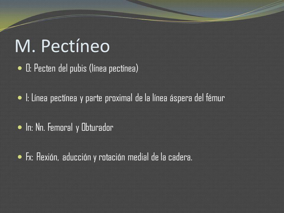 M. Pectíneo O: Pecten del pubis (línea pectínea) I: Línea pectínea y parte proximal de la línea áspera del fémur In: Nn. Femoral y Obturador Fx: Flexi