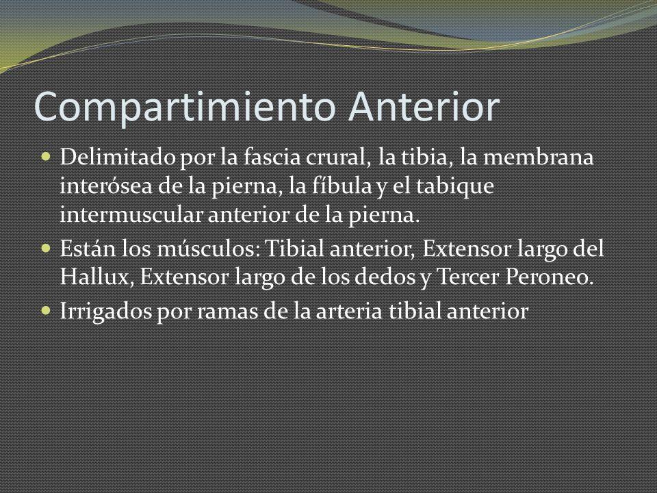 Compartimiento Anterior Delimitado por la fascia crural, la tibia, la membrana interósea de la pierna, la fíbula y el tabique intermuscular anterior d