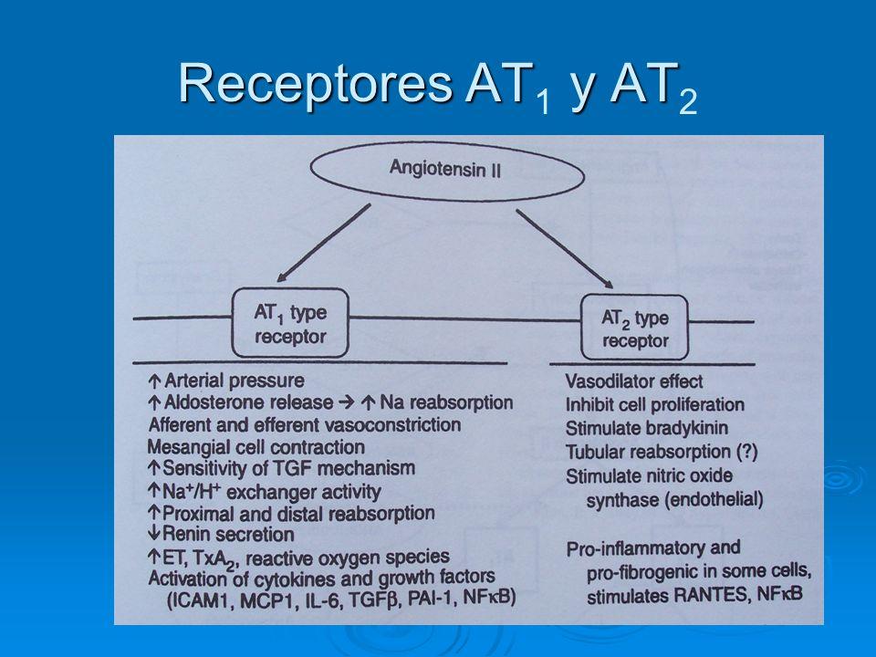 Receptores AT y AT Receptores AT 1 y AT 2