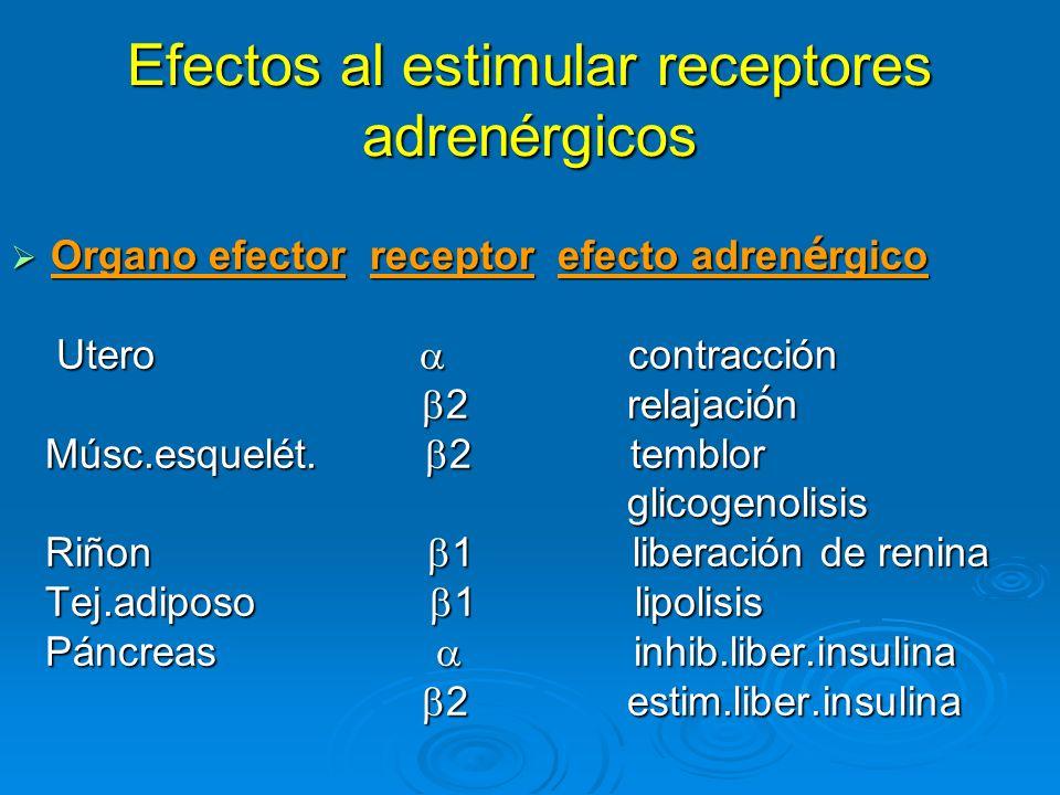 Efectos al estimular receptores adrenérgicos Organo efector receptor efecto adren é rgico Organo efector receptor efecto adren é rgico Utero contracci