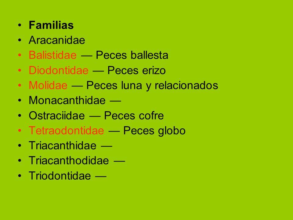 Familias Aracanidae Balistidae Peces ballesta Diodontidae Peces erizo Molidae Peces luna y relacionados Monacanthidae Ostraciidae Peces cofre Tetraodo