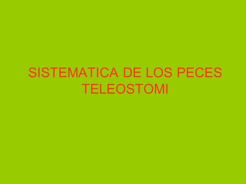 SISTEMATICA DE LOS PECES TELEOSTOMI