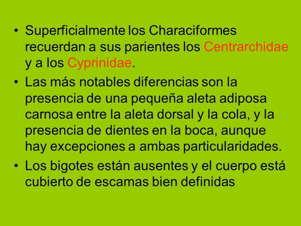 Superficialmente los Characiformes recuerdan a sus parientes los Centrarchidae y a los Cyprinidae. Las más notables diferencias son la presencia de un