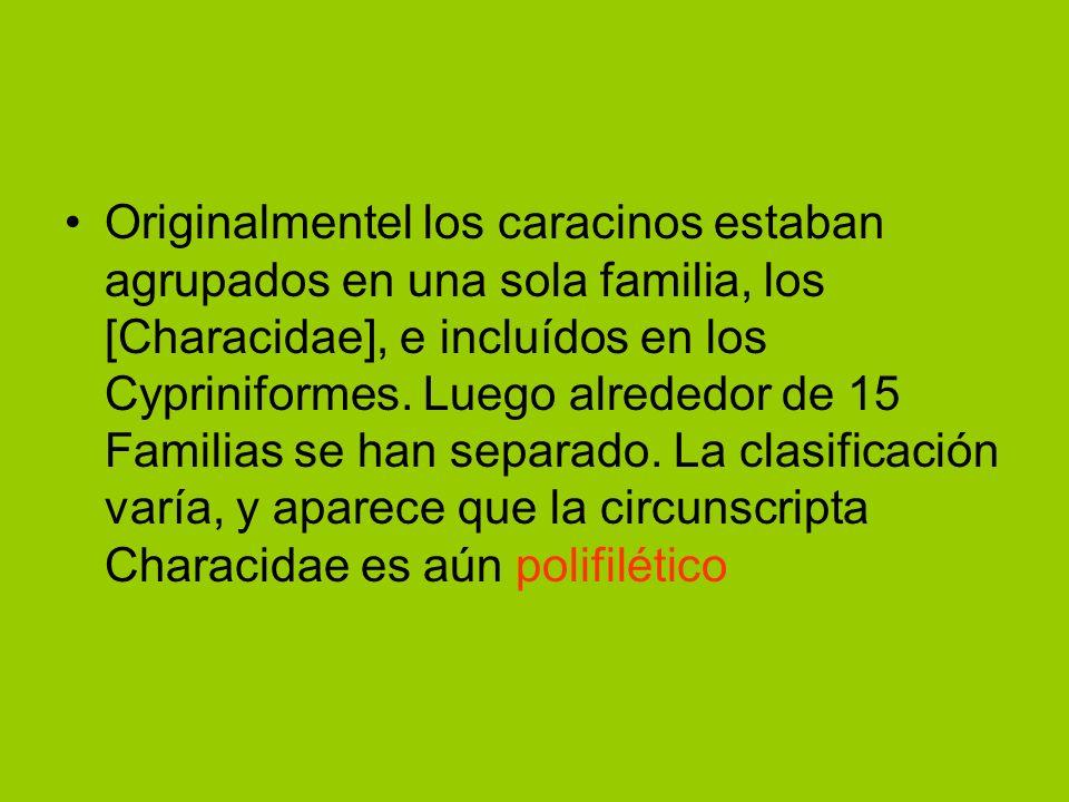 Originalmentel los caracinos estaban agrupados en una sola familia, los [Characidae], e incluídos en los Cypriniformes. Luego alrededor de 15 Familias
