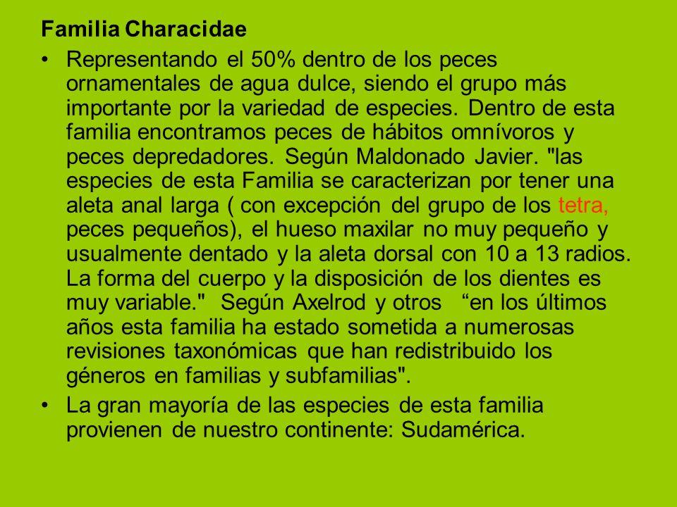 Familia Characidae Representando el 50% dentro de los peces ornamentales de agua dulce, siendo el grupo más importante por la variedad de especies. De