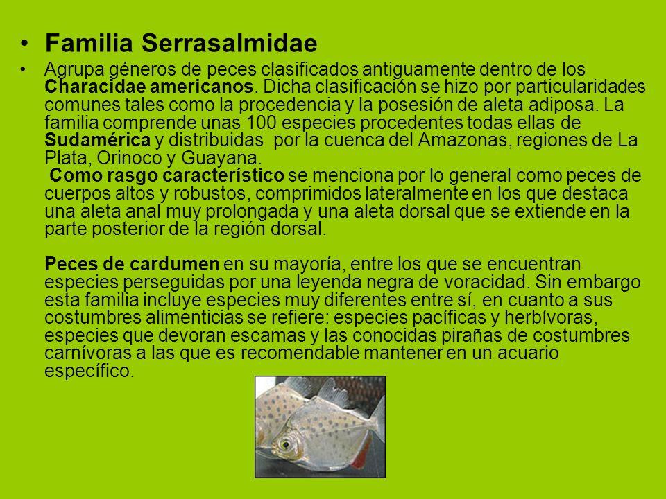 Familia Serrasalmidae Agrupa géneros de peces clasificados antiguamente dentro de los Characidae americanos. Dicha clasificación se hizo por particula