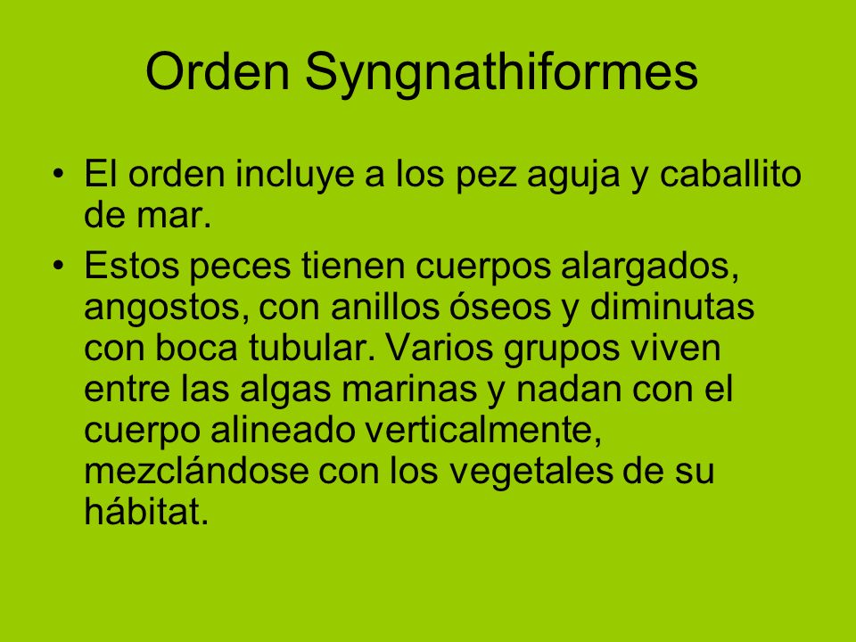 Orden Syngnathiformes El orden incluye a los pez aguja y caballito de mar. Estos peces tienen cuerpos alargados, angostos, con anillos óseos y diminut