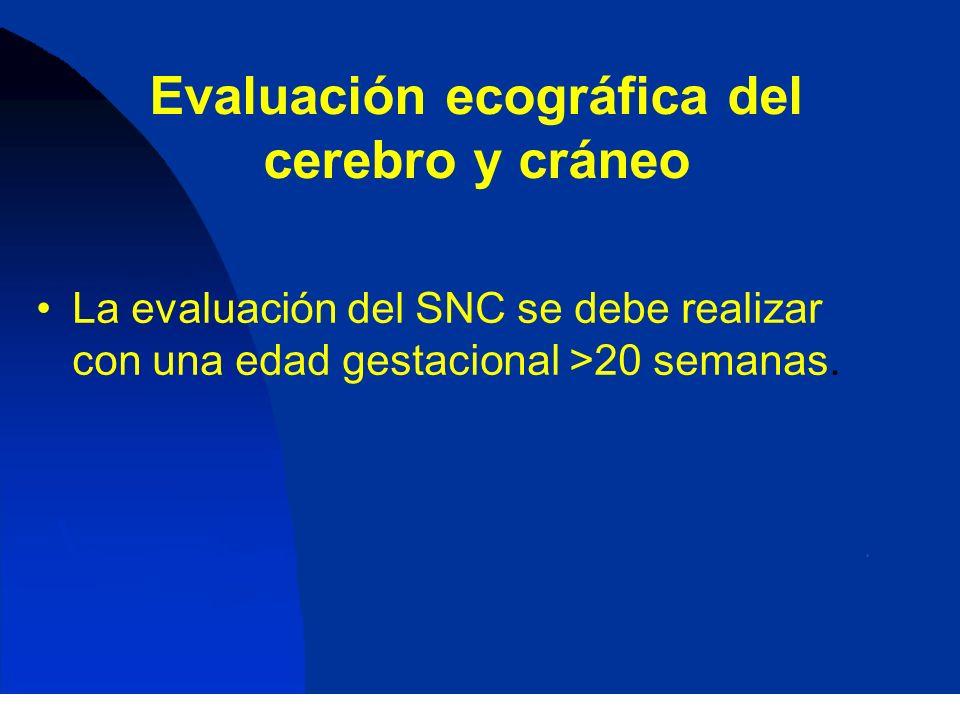 Evaluación ecográfica del cerebro y cráneo La evaluación del SNC se debe realizar con una edad gestacional >20 semanas.