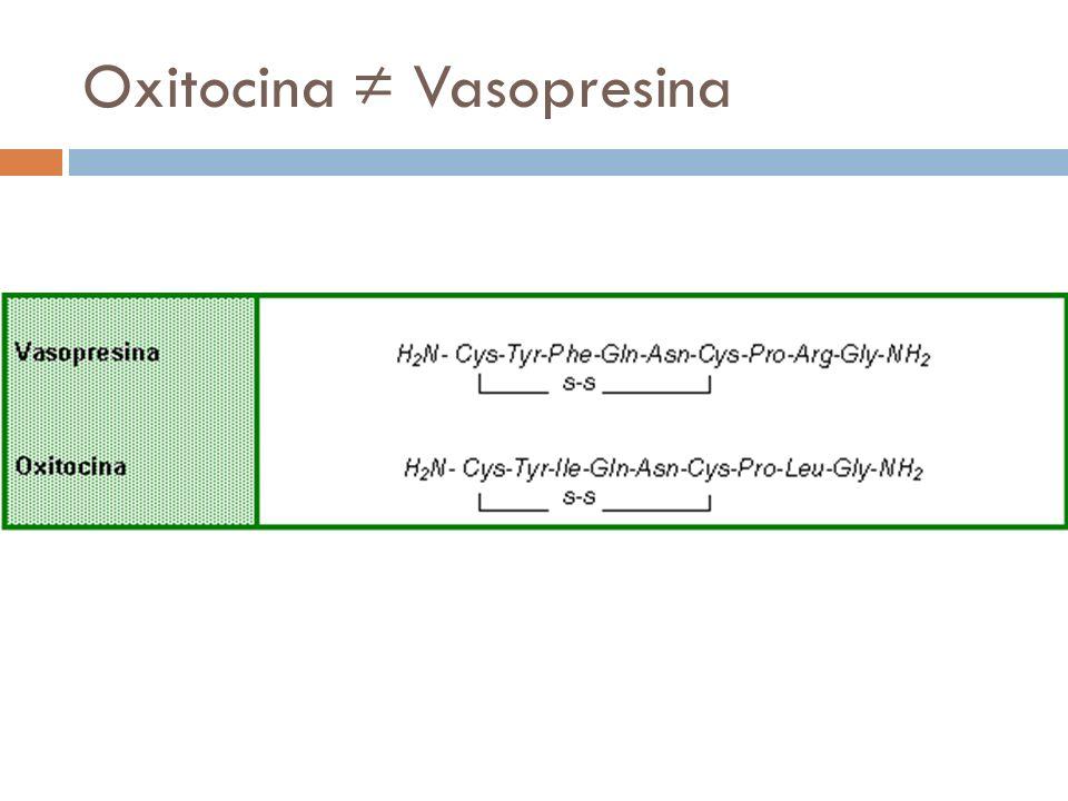 Oxitocina Vasopresina