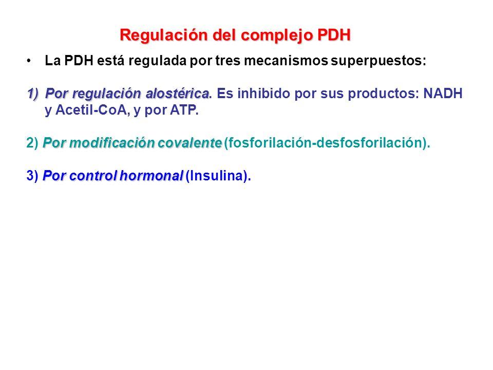 La PDH está regulada por tres mecanismos superpuestos: 1)Por regulación alostérica 1)Por regulación alostérica. Es inhibido por sus productos: NADH y