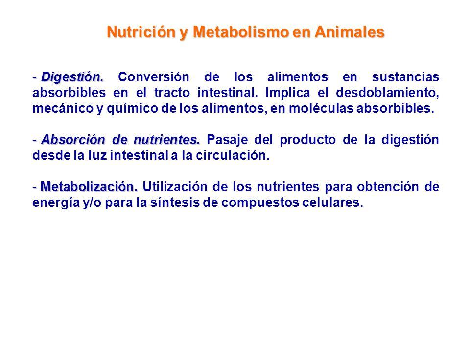 Nutrición y Metabolismo en Animales - Digestión. - Digestión. Conversión de los alimentos en sustancias absorbibles en el tracto intestinal. Implica e