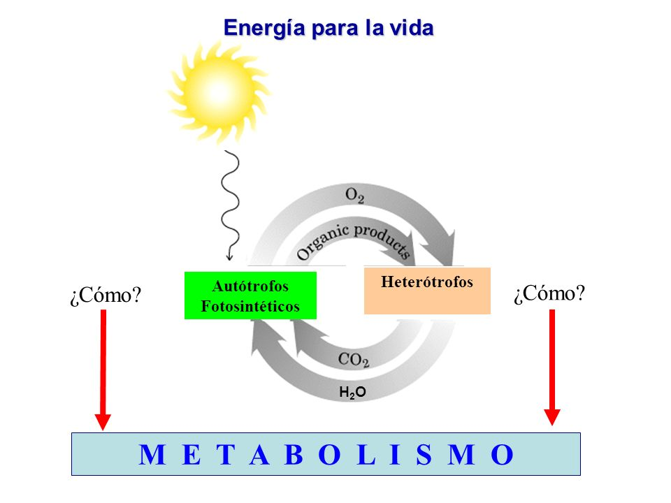 Autótrofos Fotosintéticos Heterótrofos ¿Cómo? M E T A B O L I S M O H2OH2O Energía para la vida H2OH2O