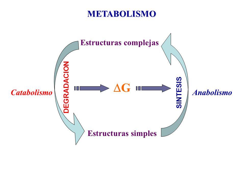 CatabolismoAnabolismo METABOLISMO Estructuras complejas Estructuras simples G DEGRADACION SINTESIS