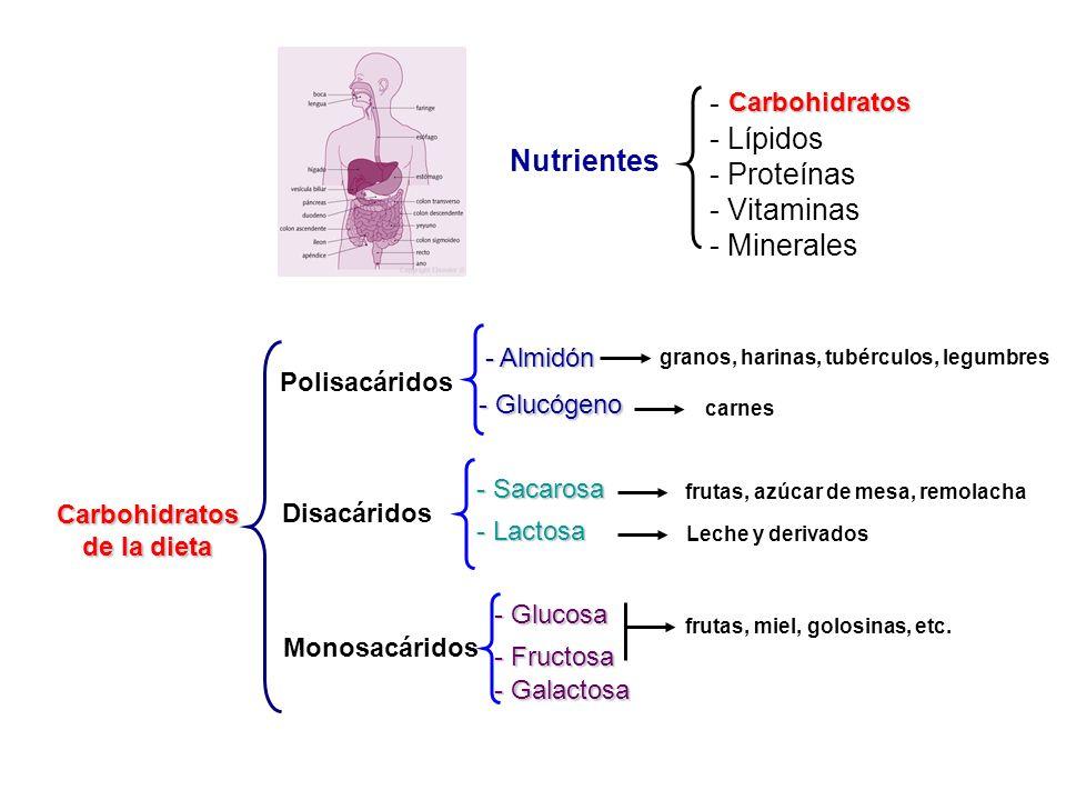- Carbohidratos - Lípidos - Proteínas - Vitaminas - Minerales Carbohidratos - Galactosa Carbohidratos de la dieta Polisacáridos Disacáridos Monosacári