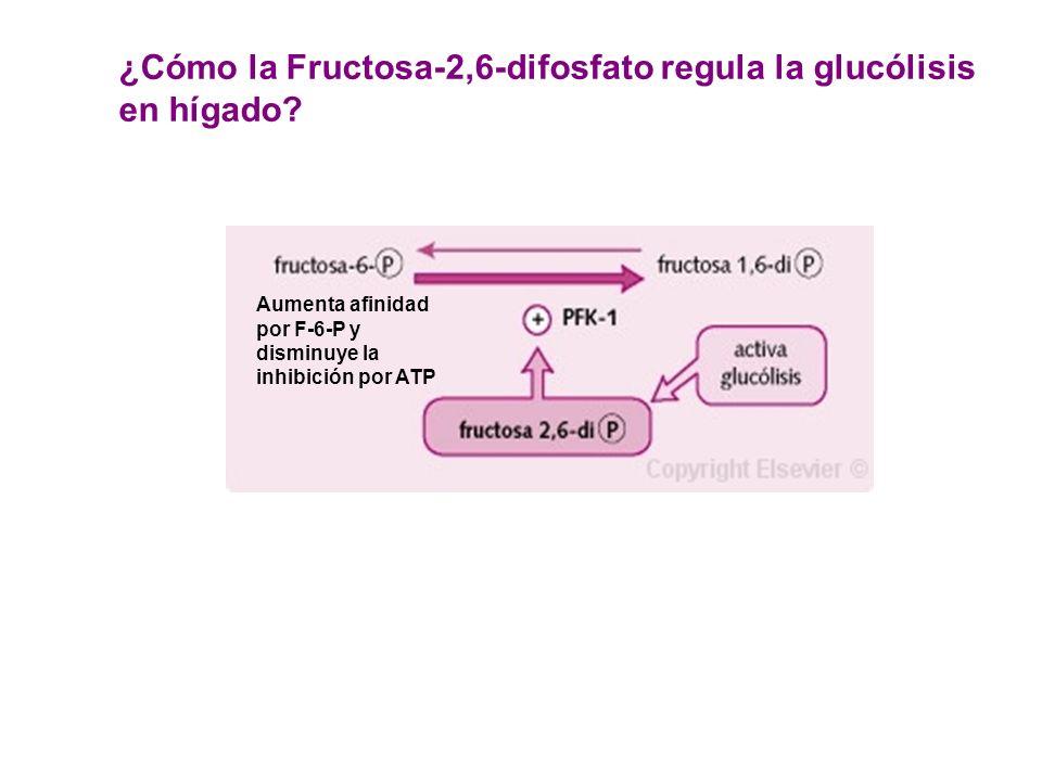 Aumenta afinidad por F-6-P y disminuye la inhibición por ATP ¿Cómo la Fructosa-2,6-difosfato regula la glucólisis en hígado?
