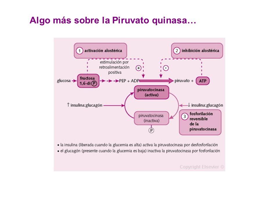 Algo más sobre la Piruvato quinasa…
