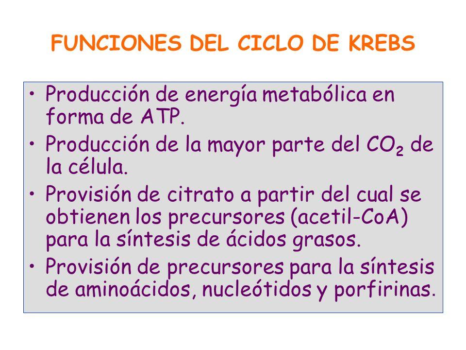 FUNCIONES DEL CICLO DE KREBS Producción de energía metabólica en forma de ATP. Producción de la mayor parte del CO 2 de la célula. Provisión de citrat