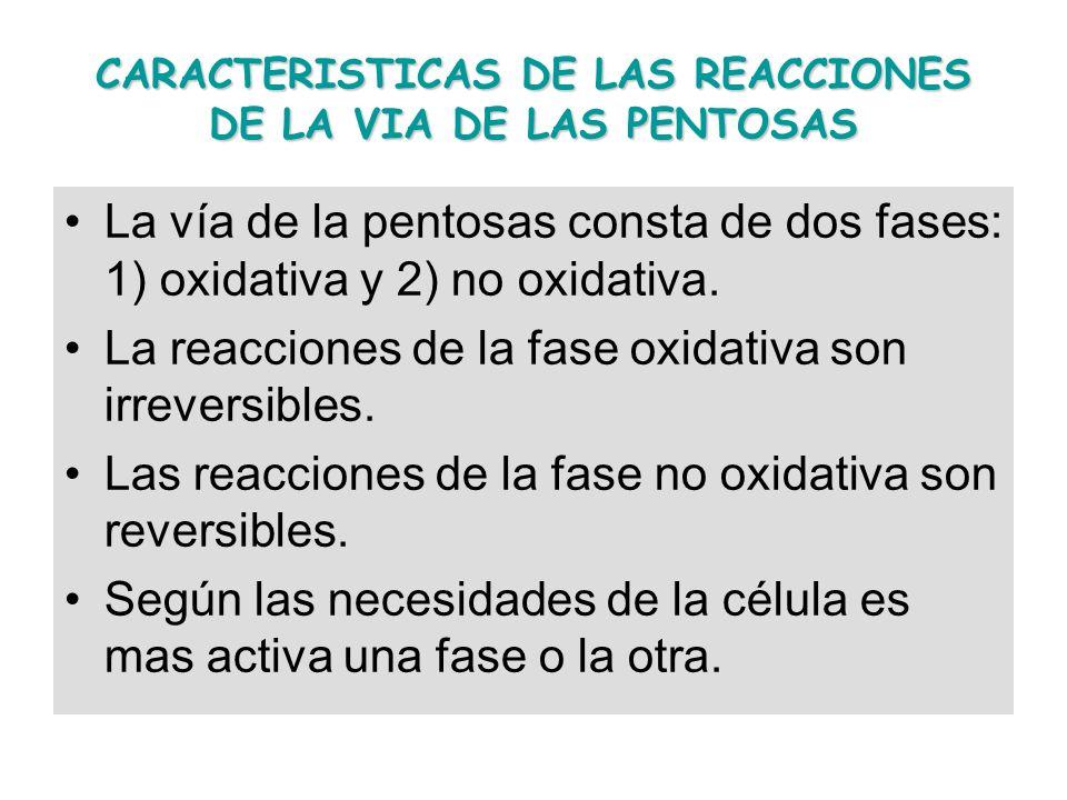 CARACTERISTICAS DE LAS REACCIONES DE LA VIA DE LAS PENTOSAS La vía de la pentosas consta de dos fases: 1) oxidativa y 2) no oxidativa. La reacciones d