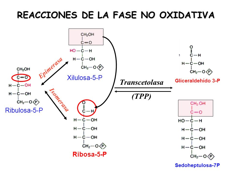 REACCIONES DE LA FASE NO OXIDATIVA Ribulosa-5-P Xilulosa-5-P Ribosa-5-P Transcetolasa (TPP) Sedoheptulosa-7P Gliceraldehído 3-P Epimerasa Isomerasa
