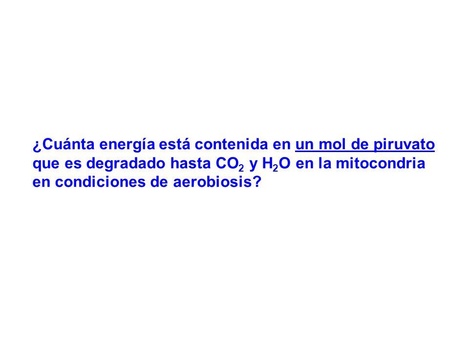 Glucosa Acs. Grasos Ciclo anfibólico