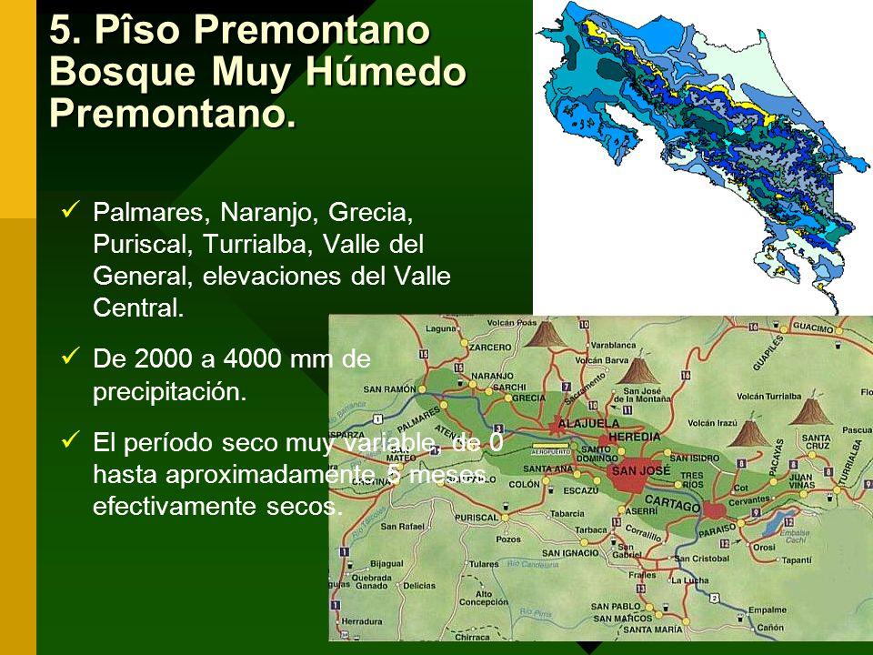 5. Pîso Premontano Bosque Muy Húmedo Premontano. Palmares, Naranjo, Grecia, Puriscal, Turrialba, Valle del General, elevaciones del Valle Central. De