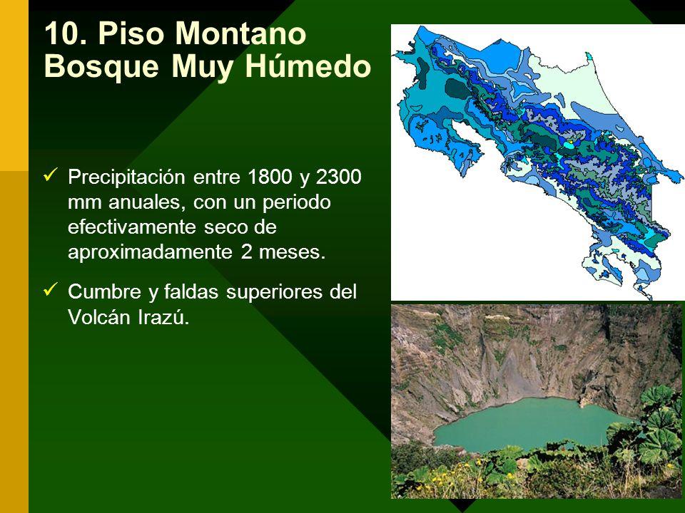 10. Piso Montano Bosque Muy Húmedo Precipitación entre 1800 y 2300 mm anuales, con un periodo efectivamente seco de aproximadamente 2 meses. Cumbre y