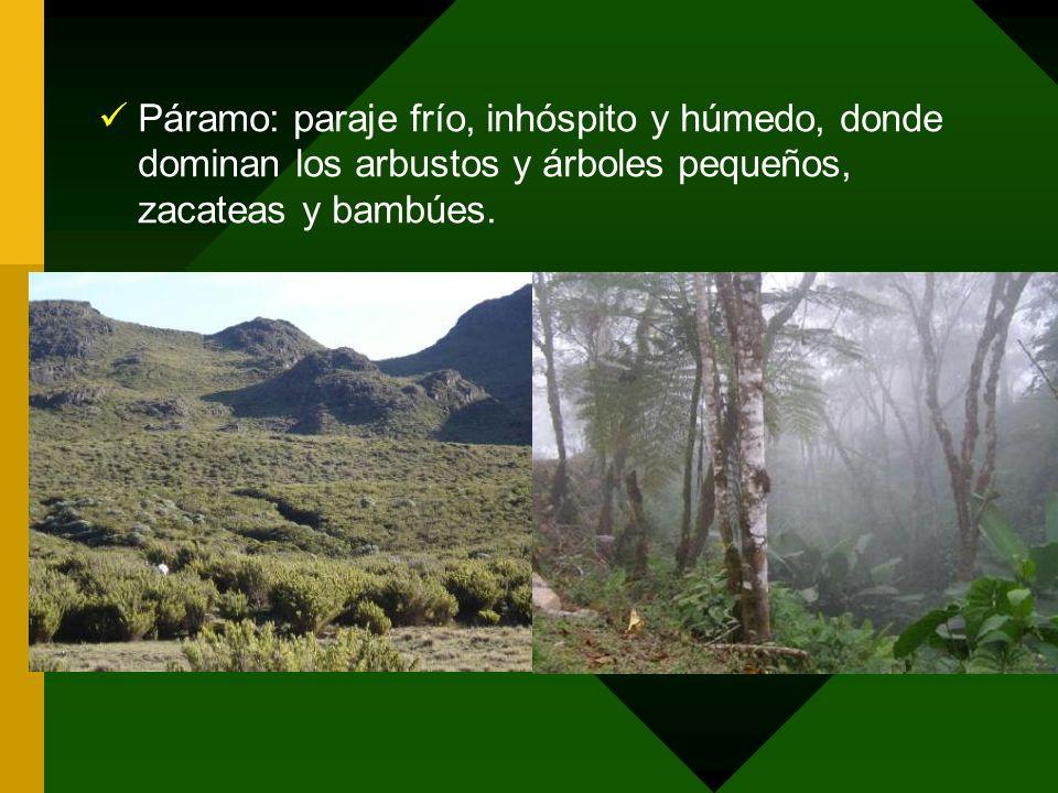 Páramo: paraje frío, inhóspito y húmedo, donde dominan los arbustos y árboles pequeños, zacateas y bambúes.